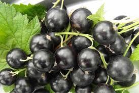Смородина черная Сахарная (Обыкновенное чудо)