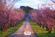 "Фон стена ""Spring paysage"" 2x1.5м"