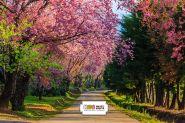 "Фон стена ""Paysage spring №1 "" 2x1.5"