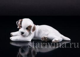 Лежащий щенок, Rosenthal, Германия, 1937 год., артикул 02443