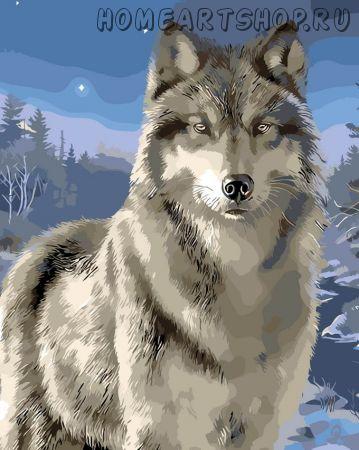 """Раскраска по номерам """"Волк"""""""