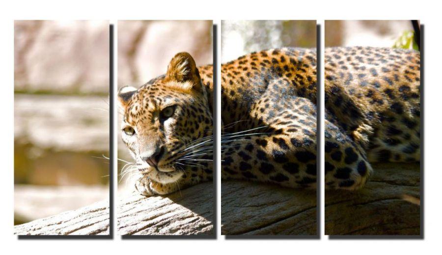 Модульная картина Грусть гепарда
