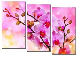 Солнечные орхидеи