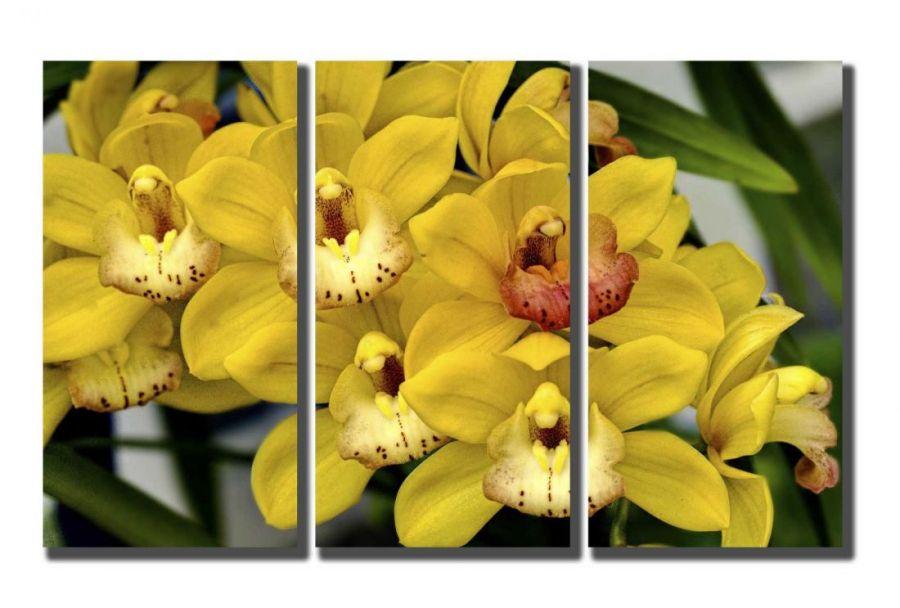 Модульная картина Желтые орхидеи