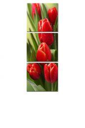 Яркие бутоны тюльпана