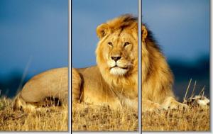 Модульная картина Царь зверей