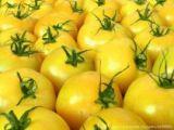 Желтоплодные и оранжевые сорта