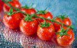 Черри-томаты открытого грунта