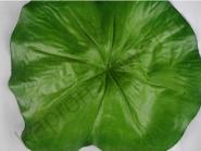 Листья лотоса