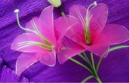 Серединка лилии плоская