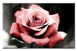 Стильная роза