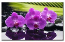 Орхидеи и камушки