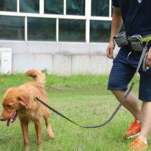 Поводок для бега с собакой (свободные руки)