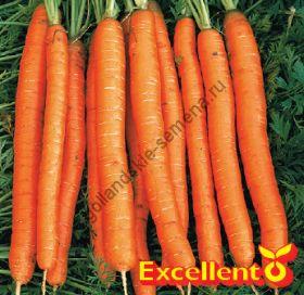 "Морковь сорт ""АМСТЕРДАМ БАК 2"" (Amsterdamse Bak 2) 2750 семян"