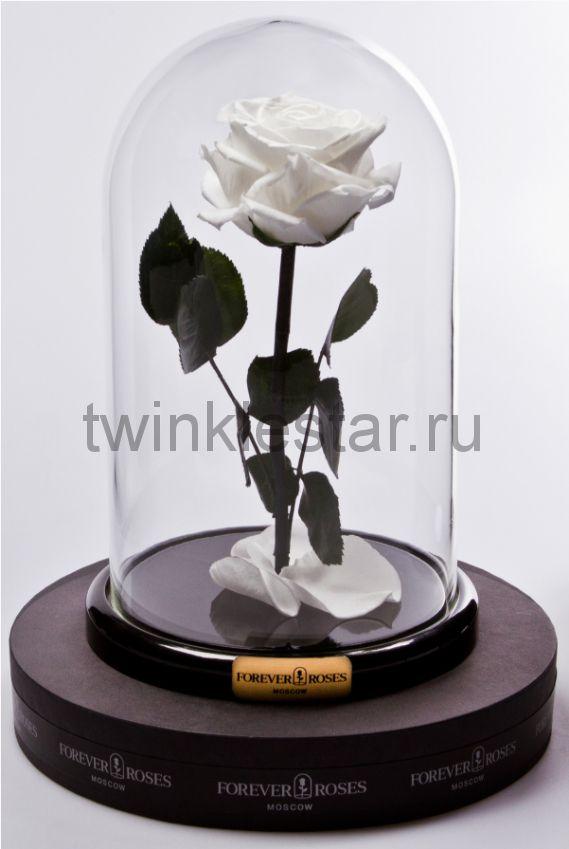Роза в колбе (белый) на прямом стебле, 27 см