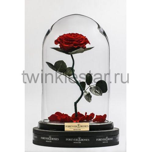 Роза в колбе (бордовая) на изогнутом стебле, 33 см