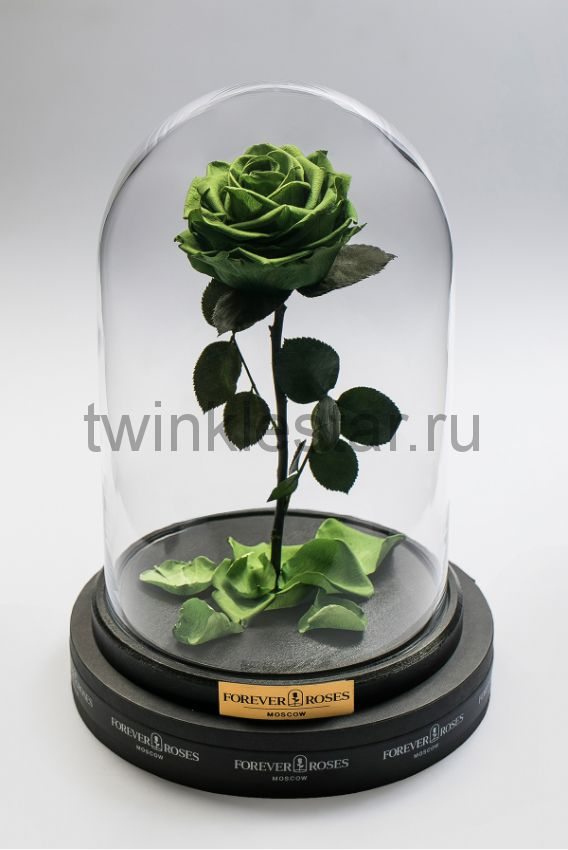 Роза в колбе (зеленая) на прямом стебле, 33 см