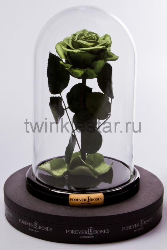 Роза в колбе (зеленая) на прямом стебле, 27 см