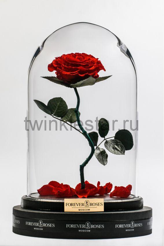 Роза в колбе (красная) на изогнутом стебле, 33 см