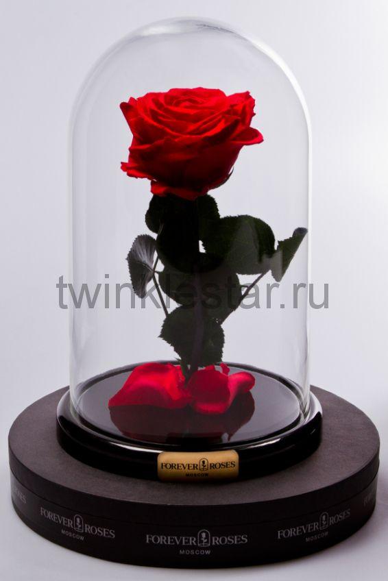 Роза в колбе (красная) на прямом стебле, 27 см