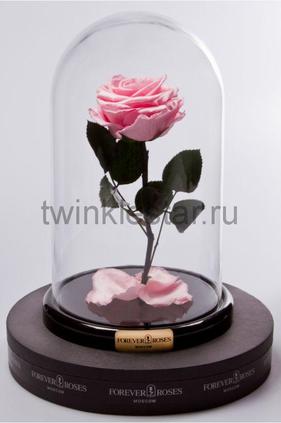 Роза в колбе (светло розовая) на прямом стебле, 27 см