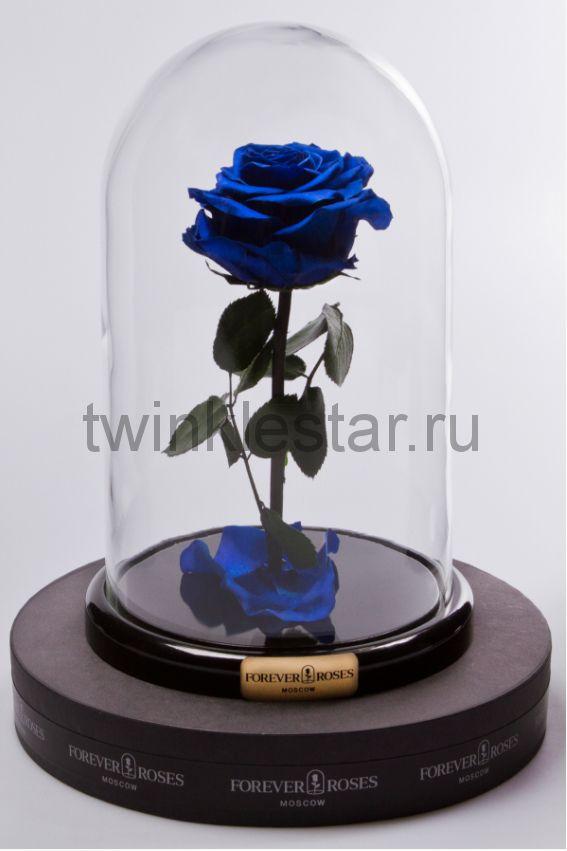 Роза в колбе (синяя) на прямом стебле, 27 см