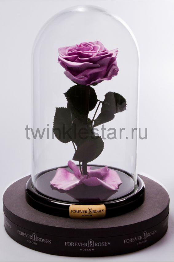 Роза в колбе (сиреневая) на прямом стебле, 27 см