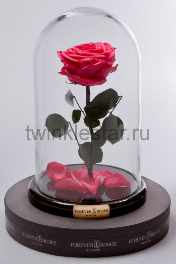 Роза в колбе (ярко розовая) на прямом стебле, 27 см
