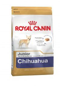 Чихуахуа паппи 1.5 кг