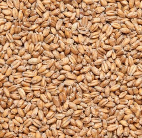 Солод пшеничный, зерно, 2,5 кг