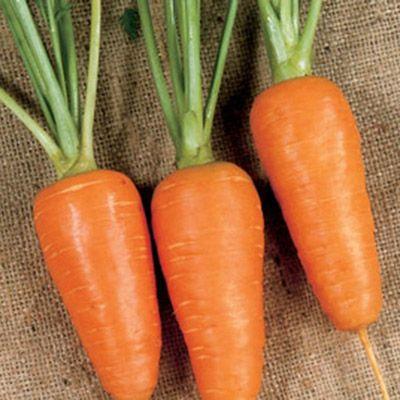 """Купить семена моркови """"Болтекст"""" (3 г) от Clause"""