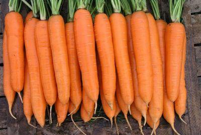 "Семена моркови ""Сиркана"" F1 от Nunhems"