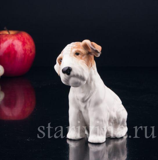 Изображение Собака, Von Schierholz, Plaue, Германия,