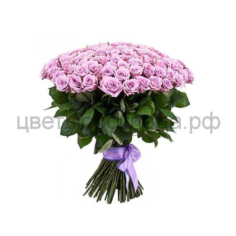 Роза России Сиреневая