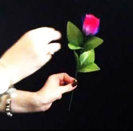 Фокус Аленький цветочек