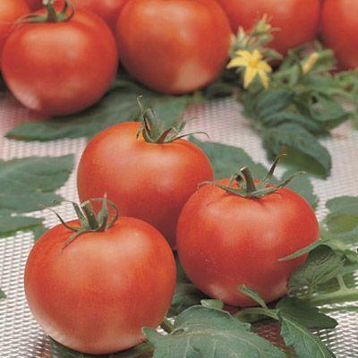 "Купить томат ""Полбиг"" F1 (20/100 семян) от Bejo"
