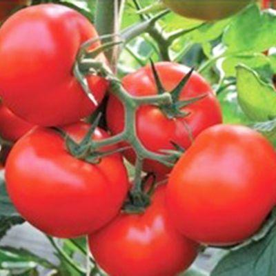"""Купить томат """"Тобольск"""" F1 (10/50 семян) от Bejo"""