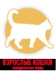 Взрослые кошки
