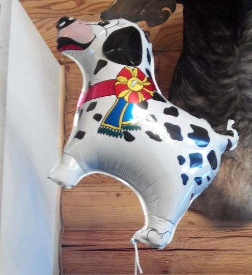 Далматинец с наградой фольгированный шар с гелием