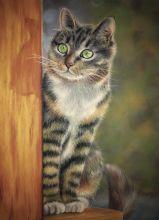 Почтовая открытка Кот у забора
