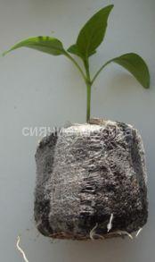 Торфо-перегнойные таблетки для рассады Jiffy, 44 мм