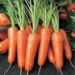 Морковь Нью Курода. Япония TAKII-SEEDS
