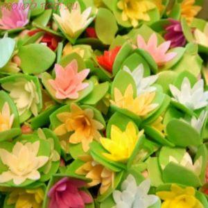 Вафельные цветы Кактусы на трилистнике  10 шт./уп.