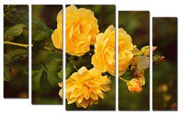 Ярко-желтые розы