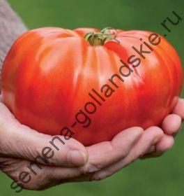 """Томат """"БРУТ"""" (Brutus) 10 семян"""