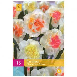 Нарцис macaron bloss 15шт. в уп.