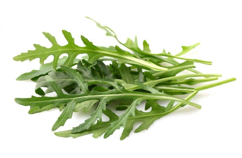 семена рукколы пасьянс 10г