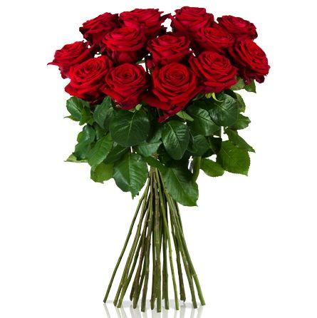 Красные розы с крупным бутоном, 70 см