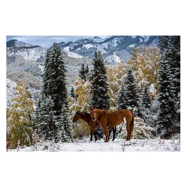 Набор Алмазная мозаика Казахстан Зимой в горах 40*50см KM0211