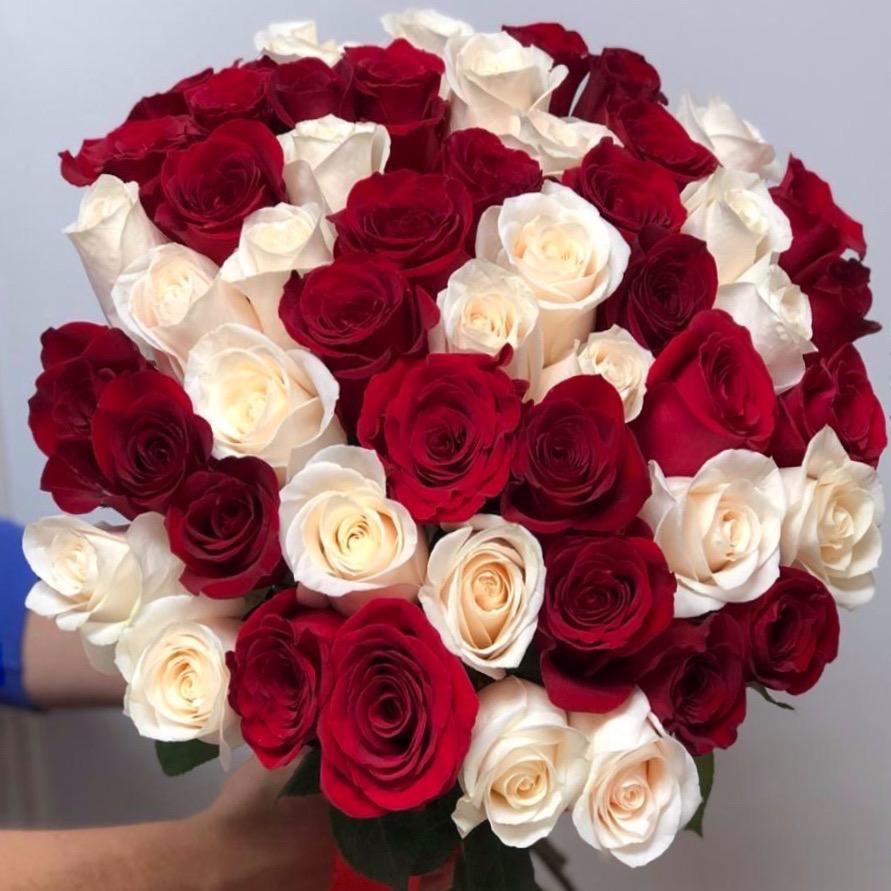 51 роза Эквадор 50 см